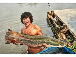 рыба в тайланде которую ловят